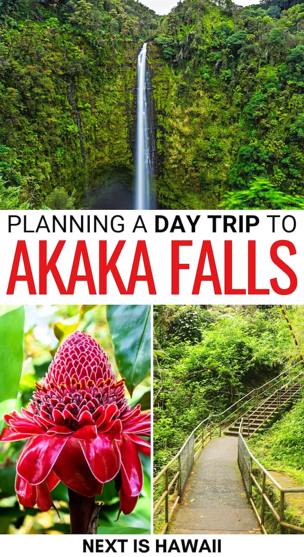 Are you looking to take a trip to Akaka Falls State Park near Hilo, Hawaii? This guide tells you how to visit Akaka Falls, what to expect, and gives hiking tips! | Visit Akaka Falls | Hilo things to do | Things to do in Hilo | Hilo day trips | Places to visit in Hawaii | Big Island waterfalls | Big Island itinerary | What to do on the Big Island | What to do in Hilo | Day trips from Hilo | Hilo waterfalls