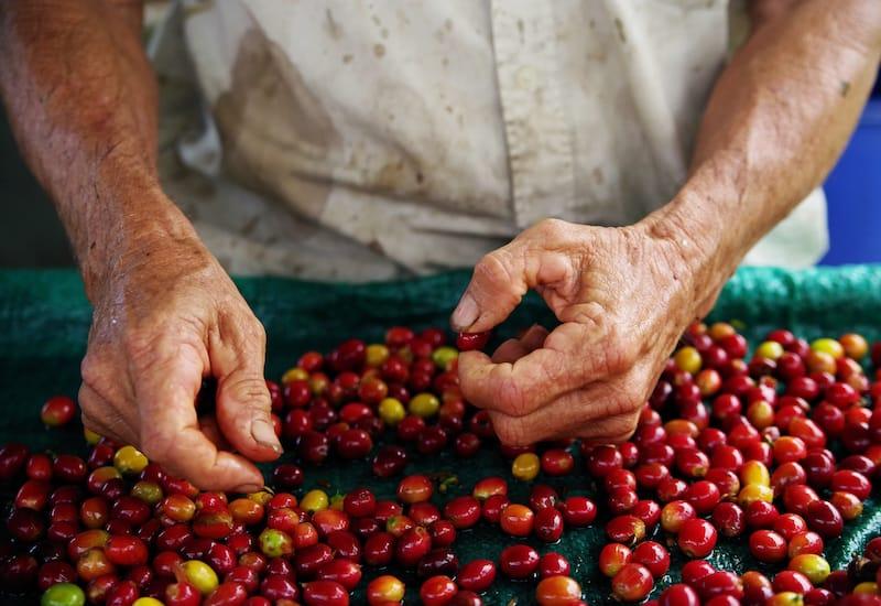 Coffee in Big Island Hawaii