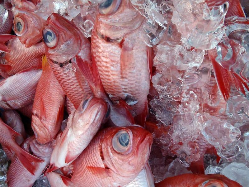Hawaii fish market
