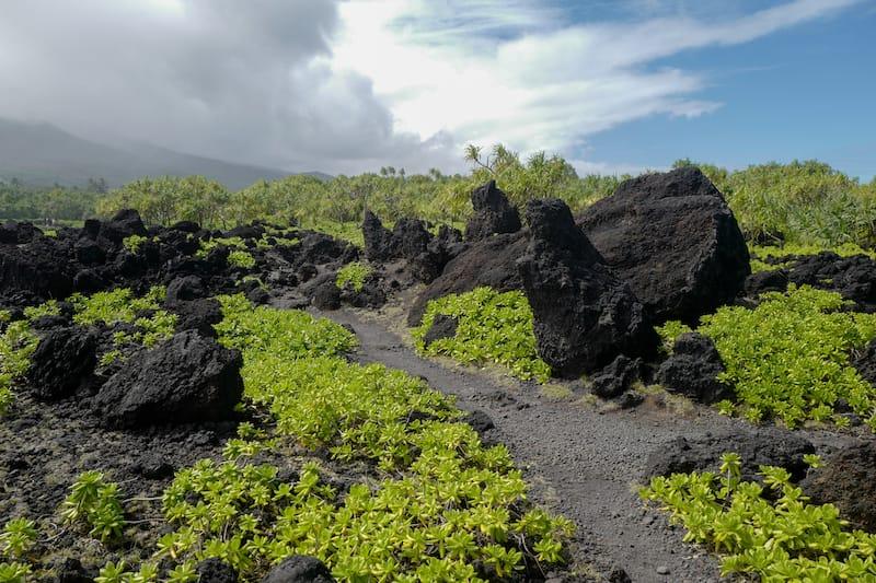 Path in Wai'anapanapa State Park