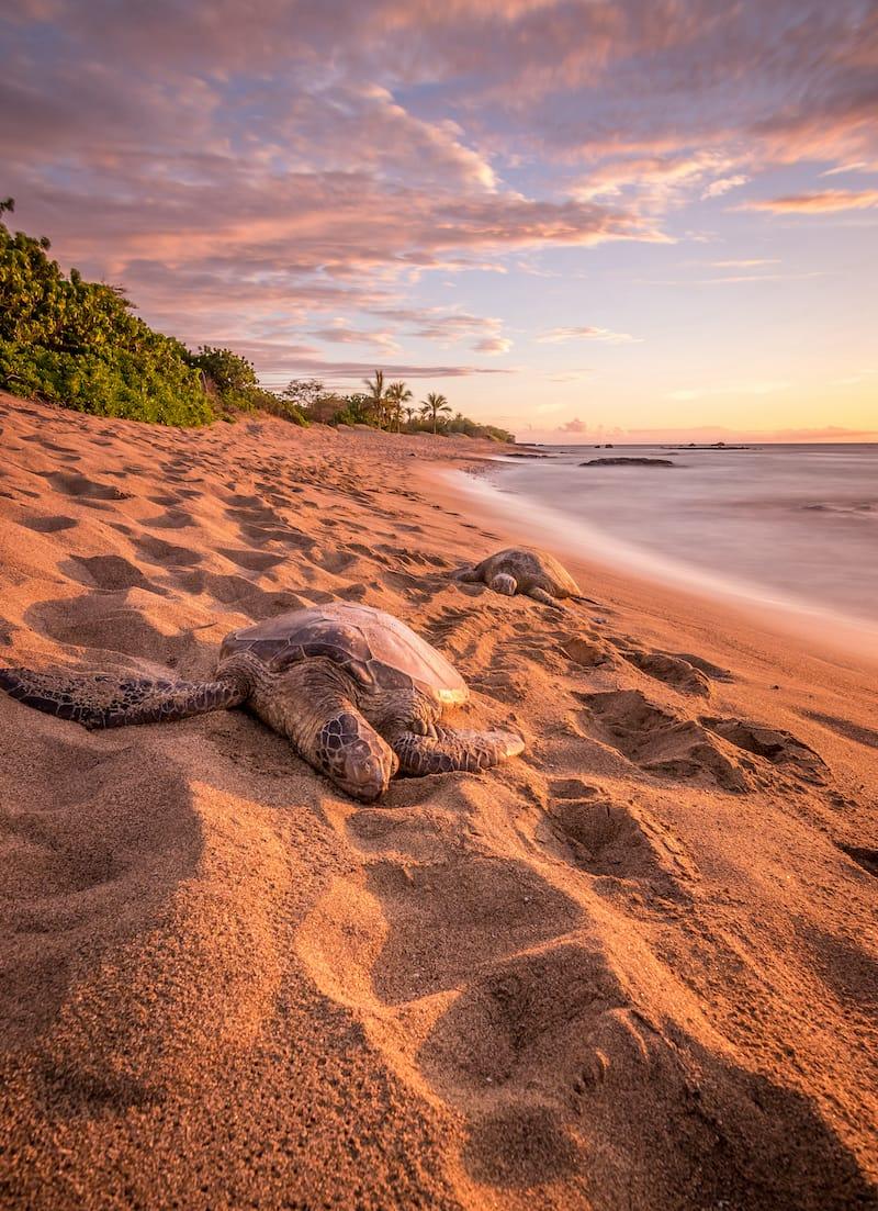Things to do in Waikoloa
