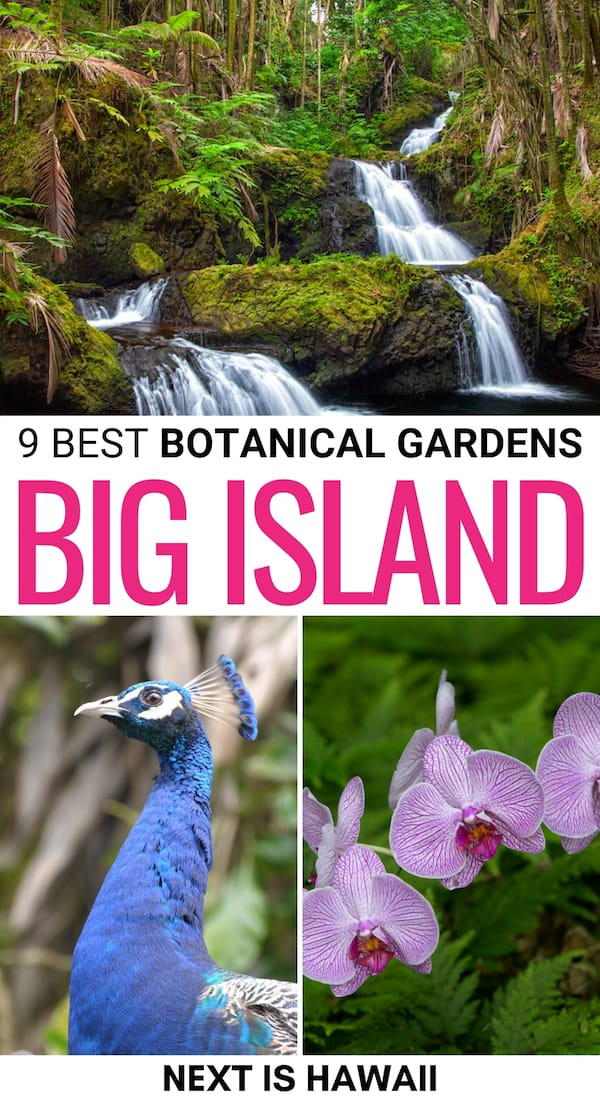 If you're looking for the best Big Island botanical gardens, we have you covered! From rainforest gardens to some of the most famous in Hawaii ... click here! | Nature Hawaii | Hawaii botanical gardens | Things to do Big Island | Big Island things to do | Places to visit Big Island | Things to do in Hawaii | Big Island hiking | Big Island gardens