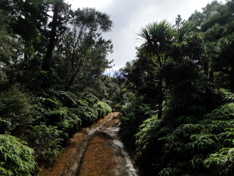 Hiking Trail in Lanai