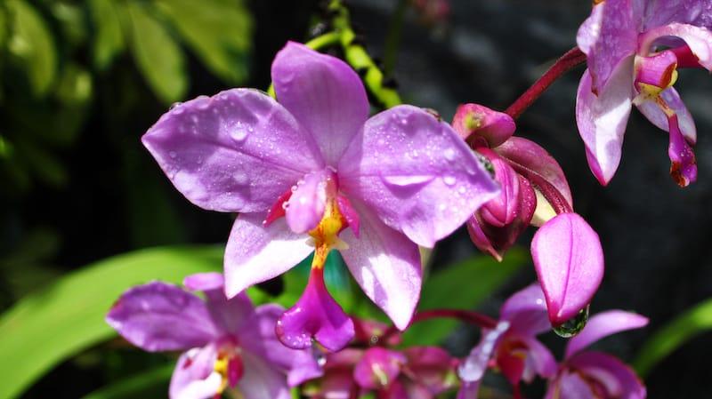 Honolulu Botanical Gardens