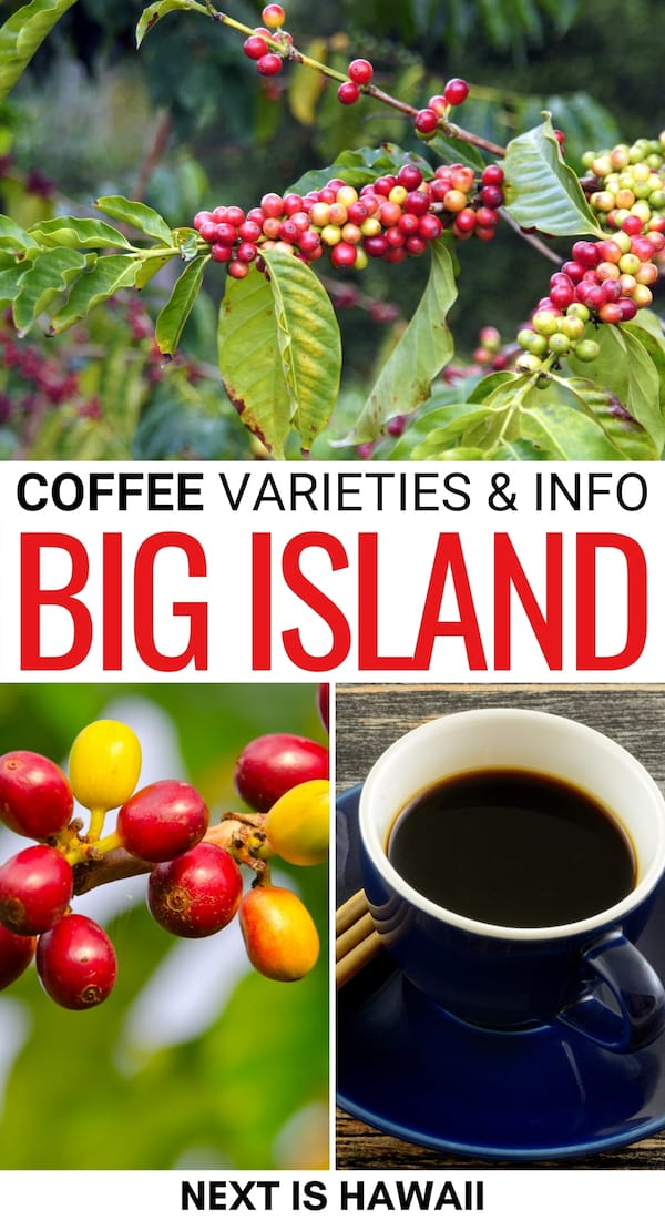 One of the most exciting things about the Big Island is coffee. This guide details the different varieties of coffee on the Big Island - including Kona coffee and more!