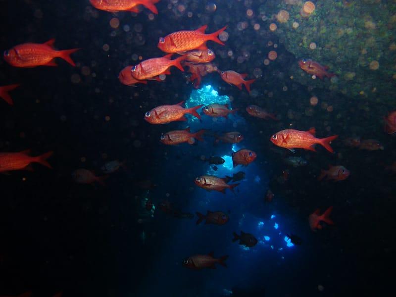 squirrelfish swim through a lava tube